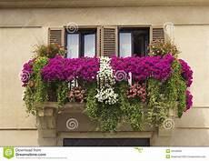 Balcony Decorated With Flowers Petunias Stock Photo