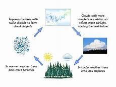 climate change news 2013 essential oils cool planet robert tisserand