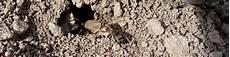 hilft backpulver gegen ameisen ᐅ was hilft gegen ameisen 10 tipps die ihnen helfen k 246 nnen