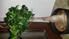 welche pflanzen sind das giftig f 252 r katzen