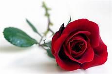 Fleurs Signification De La Couleur Des Roses Fleuriste