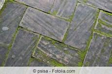 algen auf pflastersteinen entfernen terrassenplatten reinigen moos und algen terrasse