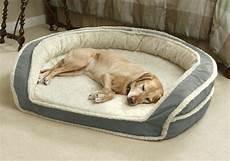 lit pour petit chien le lit pour chien n 233 cessaire et amusant archzine fr