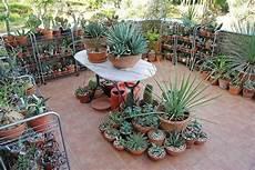giardini piante grasse per esterno piante da balcone resistenti al sole e al freddo con