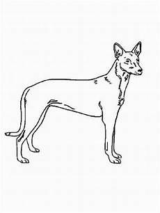 malvorlagen hunde gratis schlanker hund ausmalbild malvorlage hunde