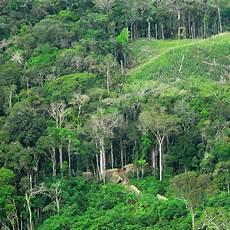 Mengapa Hutan Indonesia Disebut Paru Paru Dunia Sebutkan Itu