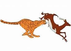Kostenlose Malvorlage Gepard Malvorlagen Gepard Gratis