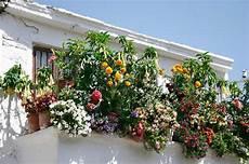 fiori in terrazzo trasformare il balcone in un oasi immersa nel verde