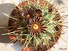 fiori di cactus storie cactus i pi 249 attesi della stagione