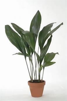 11 Zimmerpflanzen F 252 R Dunkle Ecken Pflanzen Zimmer