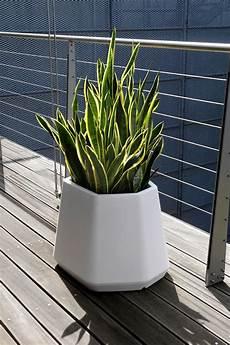 vasi per piante da esterno prezzi vaso per piante da esterno e interno ops m nicoli
