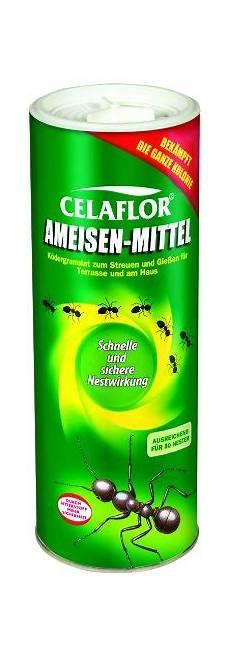 celaflor ameisen k 246 der 2 dosen ameisen im haus
