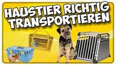 transport hund katze und kleintieren im auto so