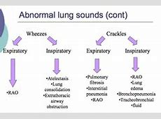 lung sounds crackles