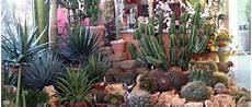giardini piante grasse per esterno giardino di piante grasse con consigli per realizzarlo