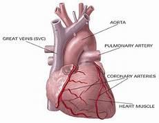 Gambar Jantung Manusia High Size Contoh Artikel Makalah