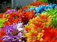 fiori e the of flowers