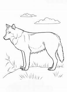 kostenlose malvorlagen wolf wolf bilder zum ausmalen und ausdrucken