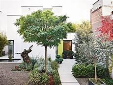 kleinen garten bepflanzen den vorgarten gestalten und bepflanzen vorgarten