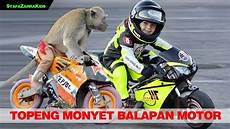 Topeng Monyet Lucu Monyet Balapan Motor Monkey