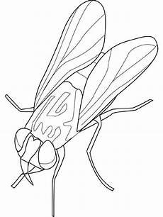 insekten malvorlagen malvorlagen insekten und lustige