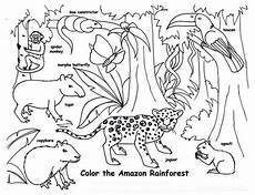 free coloring pages of animals in the rainforest 17397 rainforest animals coloring page rainforest animals coloring page color nimbus