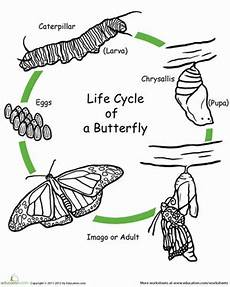 animal cycle worksheets 13938 color the cycle butterfly cycles butterfly cycle cycle for