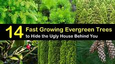 14 Fast Growing Evergreen Trees To Hide The House