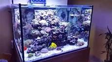 meerwasseraquarium 430l miniriff nanoriff reeftank teil