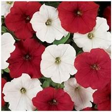 Easy Wave O Canada Mix Trailing Petunia 20 Pelleted