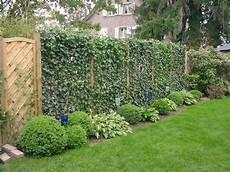 Sichtschutz Im Garten Diy Academy