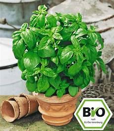 bio basilikum 1a pflanzen kaufen baldur garten
