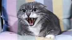 katzen die sprache der katzen katzen haustiere