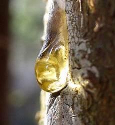 Harzflecken Entfernen Kleidung Stoff Auto Haut Holz