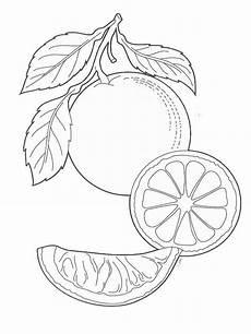 Ausmalbilder Orange Obst Malvorlagen Orange Ausmalbilder Kostenlos Zum Ausdrucken
