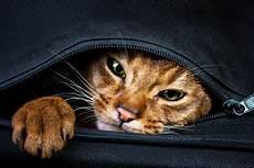 darf vermieter katze verbieten nemoci koček přenosn 233 na člověka prevence a l 233 čba