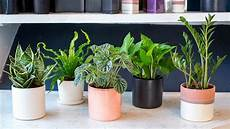 low light plants for bedroom 11 plants for your bedroom to help you sleep better diet of life
