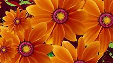 flower wallpaper for background flowers orange color desktop hd wallpaper for pc