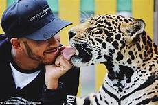 black jaguar white tiger controversy lewis hamilton comes from peta after he plays