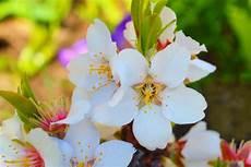 fiori d bach fiori di bach elenco propriet 224 e benefici rimedi