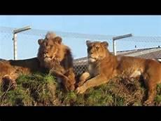 am zoo south lakes safari zoo 2016 part 2