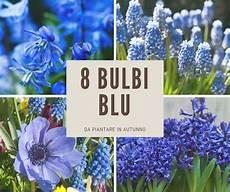 fiori bulbo gli 8 bulbi dai fiori pi 249 belli fai da te in giardino