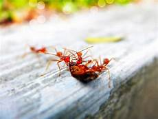 hilft backpulver gegen ameisen die besten und effektivsten hausmittel gegen ameisen in