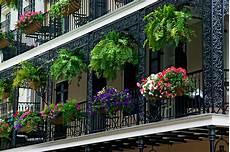 piante da terrazzo perenni piante da terrazzo