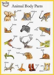 animal parts worksheets esl 14296 at ceip santa gertrudis animal parts