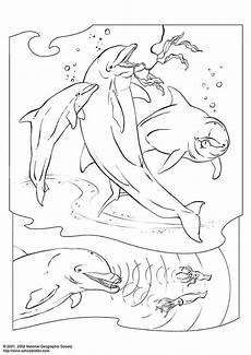 Ausmalbild Delfin Mit Malvorlage Delphin Kostenlose Ausmalbilder Zum Ausdrucken