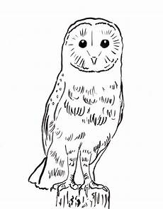 barn owl coloring page starts