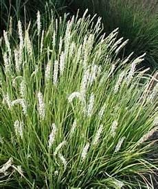 pflanzen für trockene sonnige standorte lebensbereiche trockenheitsvertr 228 gliche pflanzen