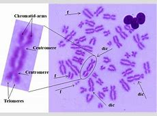 coronavirus cdc isolation
