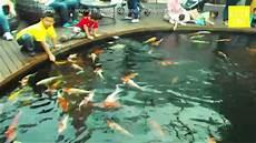 Kolam Ikan Koi Di Summarecon Mall Serpong
